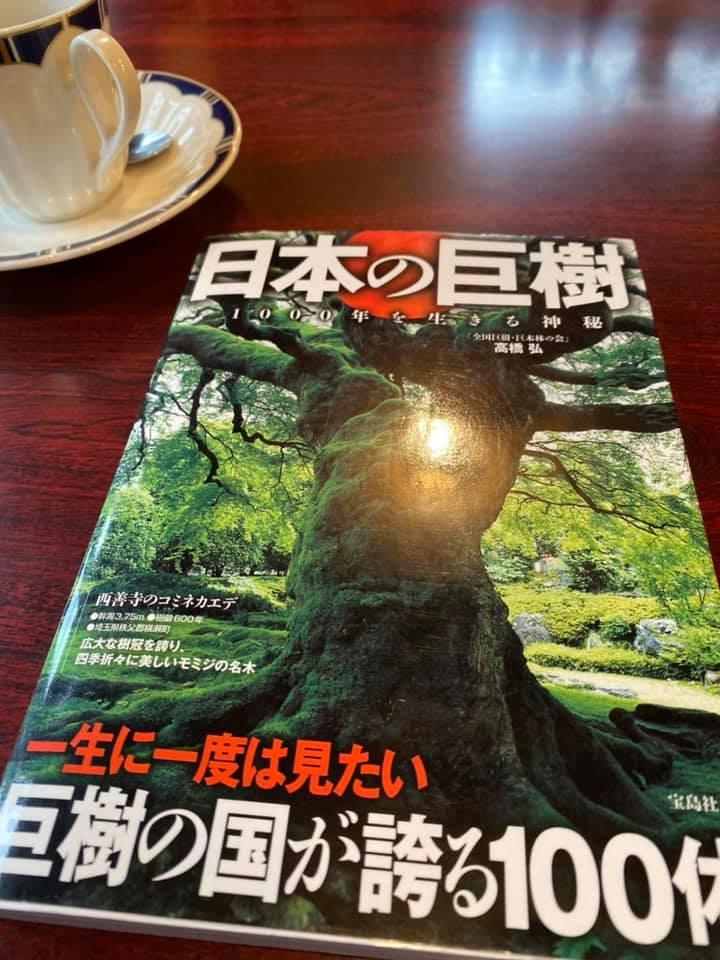 日本の巨樹、喫茶店チャペルに会った本
